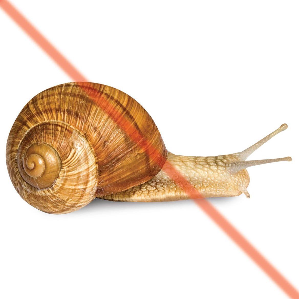 Copper Slug and Snail Repellent Tape Set of 2-348167