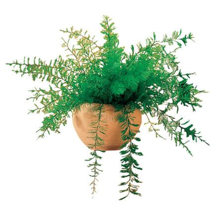 Mysterious Air Fern®, Set of 4-366342