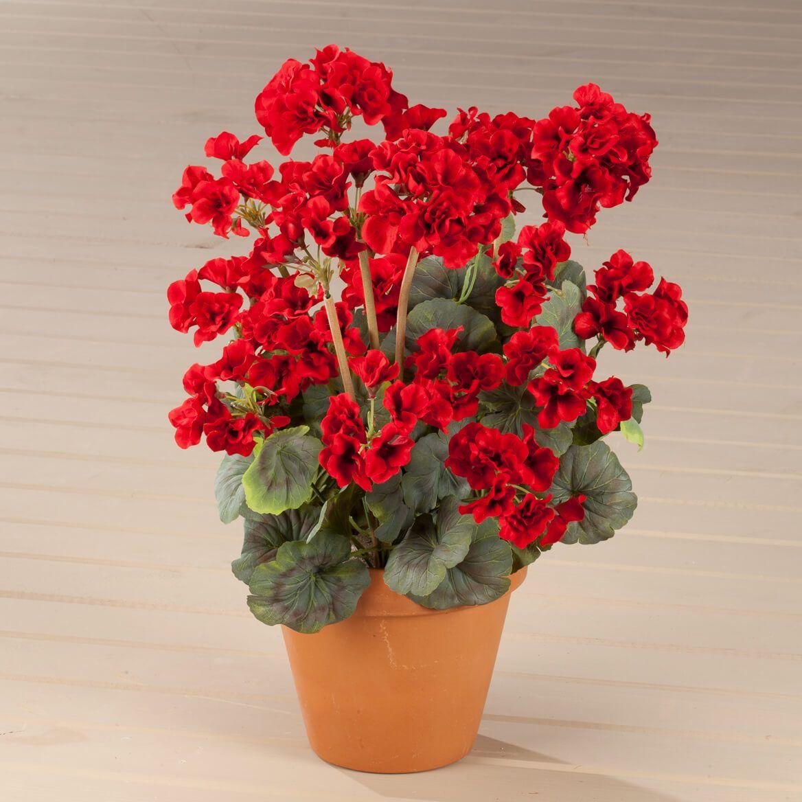 Geranium Bush by OakRidge™-338896