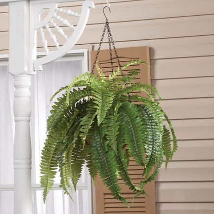 Fully Assembled Fern Hanging Basket by OakRidge™-359080