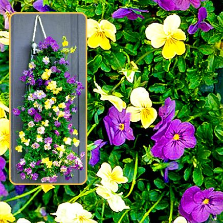 Bag O'Blooms® Shade Loving Pansies-362062