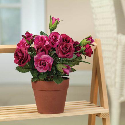 Mini Potted Rose by OakRidge™-369004