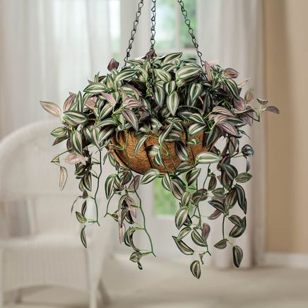 Fully Assembled Wandering Jew Basket-369041