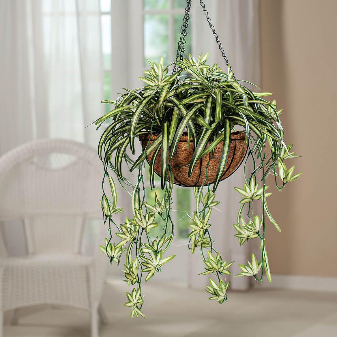Fully Assembled Spider Basket by OakRidge™-369042