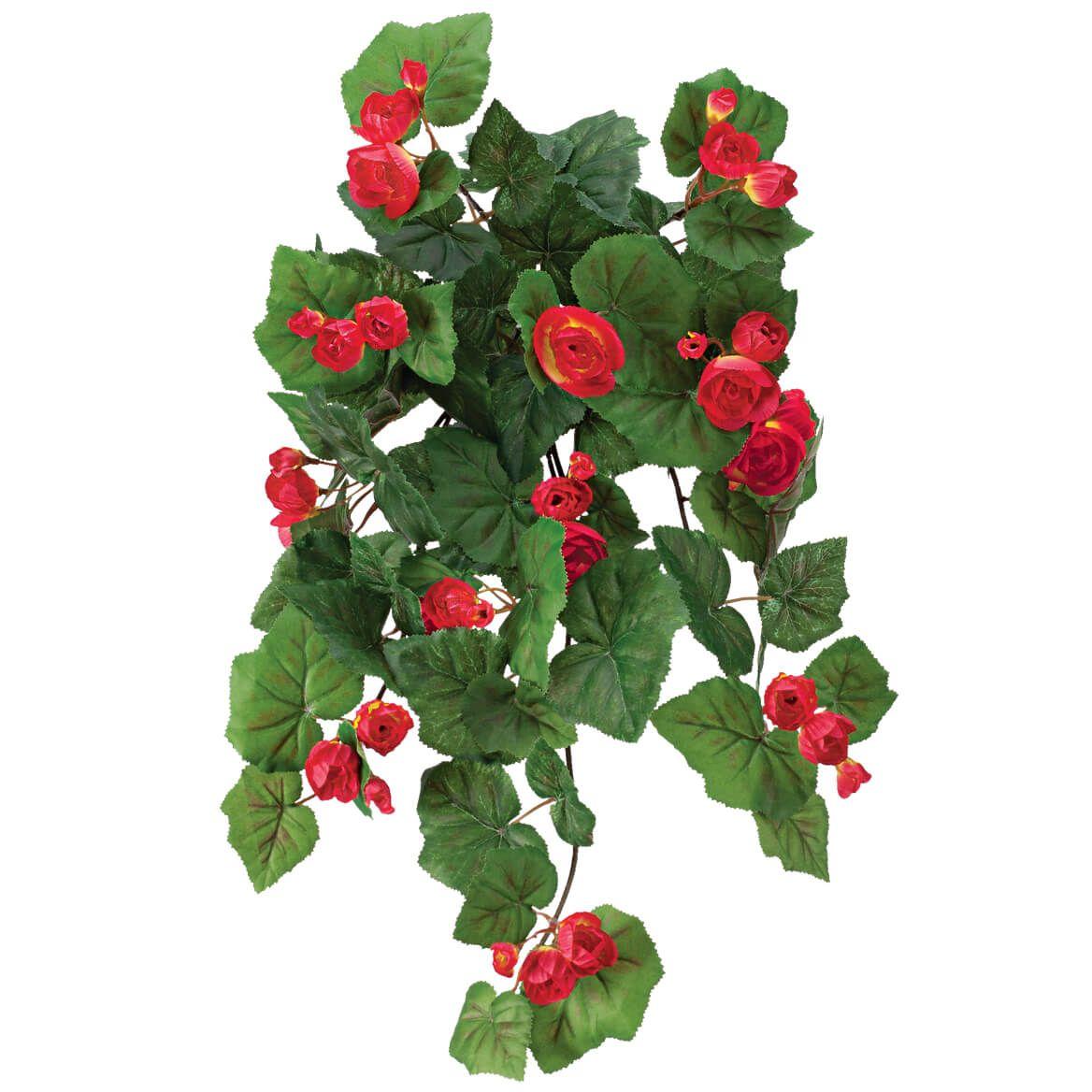 Begonia Hanging Stem by OakRidge™-355287
