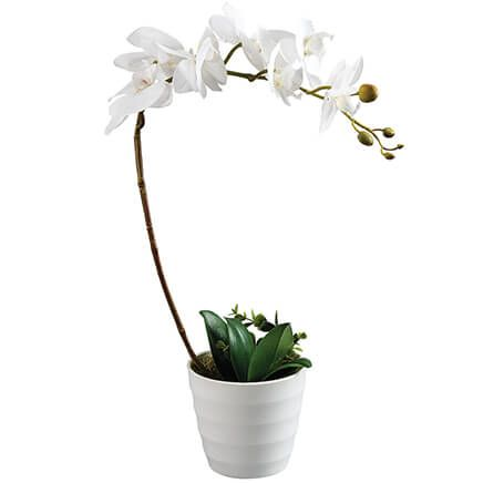 White Orchid with Flower Pot by OakRidge™-368766