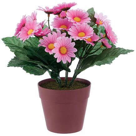 Mini Potted Daisy-369009
