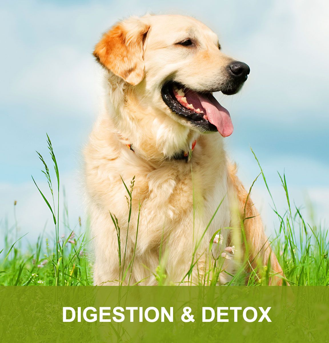 Digestion and Detox