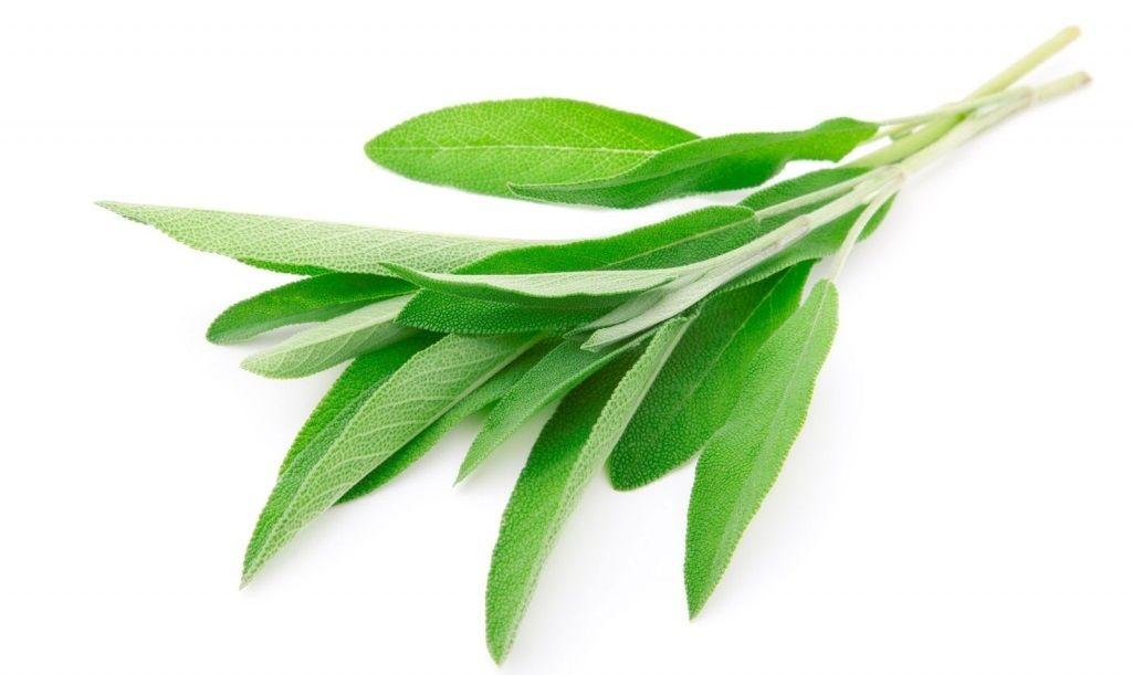 Sage Native Remedies