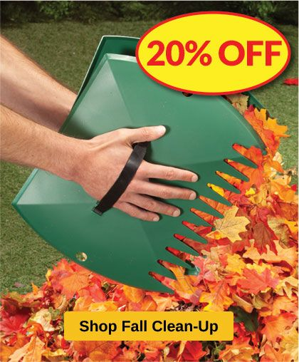 Fall Clean Up - 20% OFF