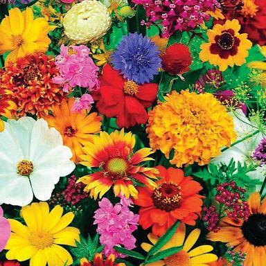 Plants & Planters Image