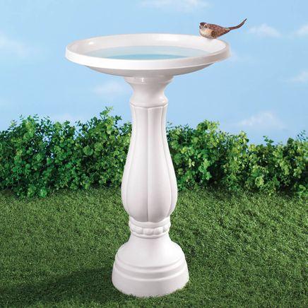 Bird Bath-338269