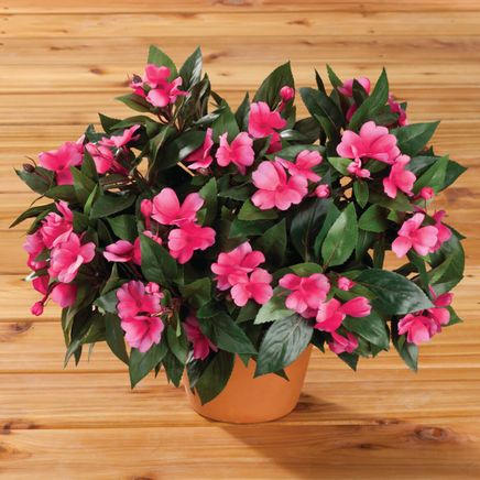 Impatiens Bush by OakRidge™-341104