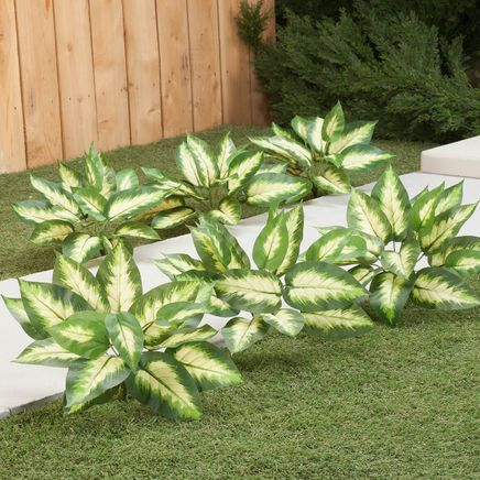 Hosta Bushes, Set of 3 by Oakridge Outdoor™-362046