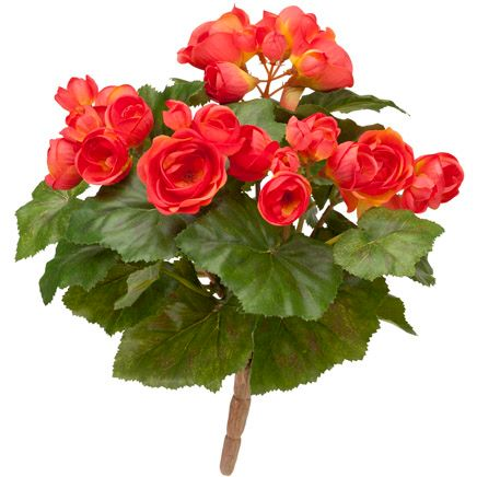 Begonia Bush by OakRidge™-348018