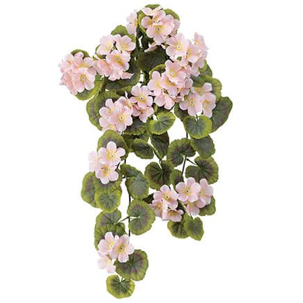 Geranium Hanging Stem by OakRidge™-355281