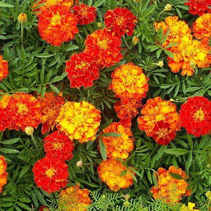 """Flower Mat, Merry Marigolds 17""""x5'-363897"""