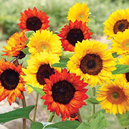 Sunflower Garden Mat-367362